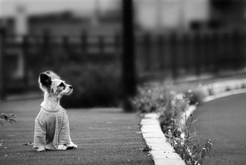 abandono-perros-animales-2.jpg