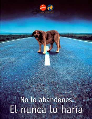 abandono-perros-animales.jpg