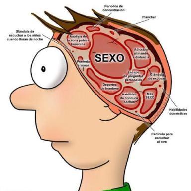 cerebromasculino1.jpg
