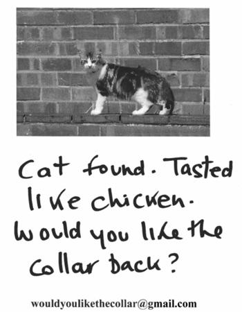 gato-encontrado.jpg