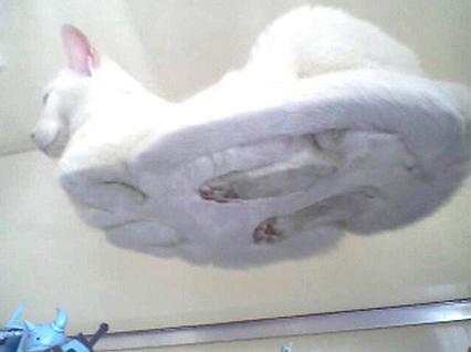 gato-ovni.jpg