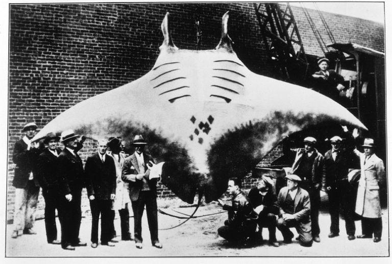 peces mas raros del mundo