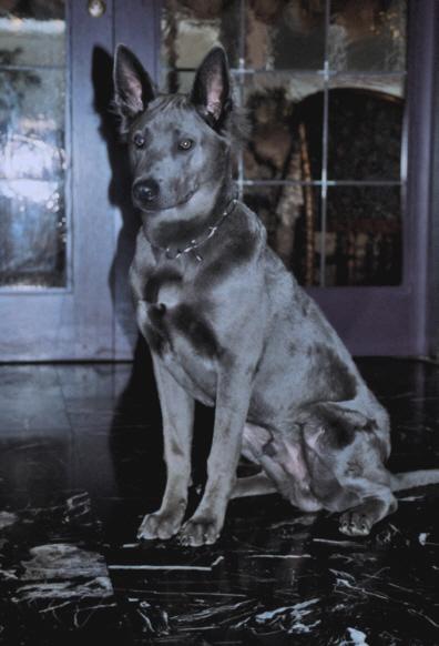 perro-azul.jpg