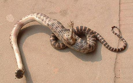 serpientes-con-patas.jpg